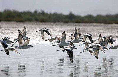 温州爱鸟周来了 目前温州境内有记录鸟类超过400种