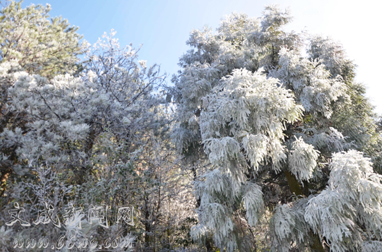 """月老山现""""雪凇""""景观"""