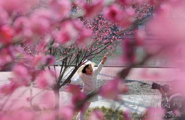 泗溪河畔梅花闹春