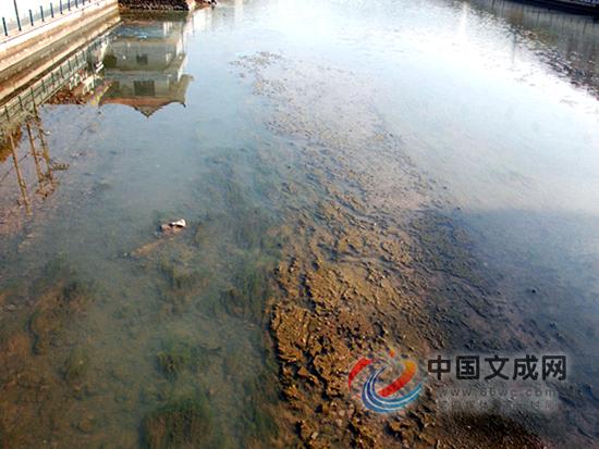 """泗溪河浮萍""""疯""""长,水质出问题了?"""