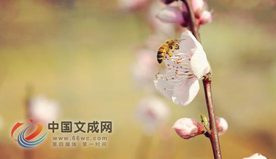春暖花开 桃花袭人