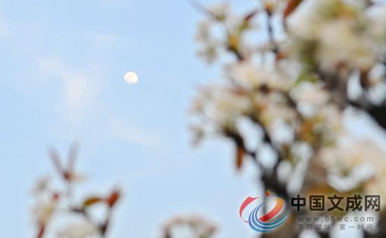 梨花盛开香满园