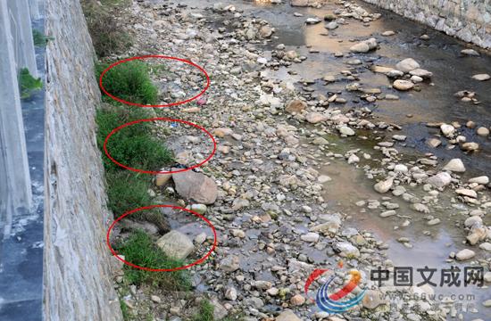 """象溪河道水质变差村民找到""""源头""""?"""