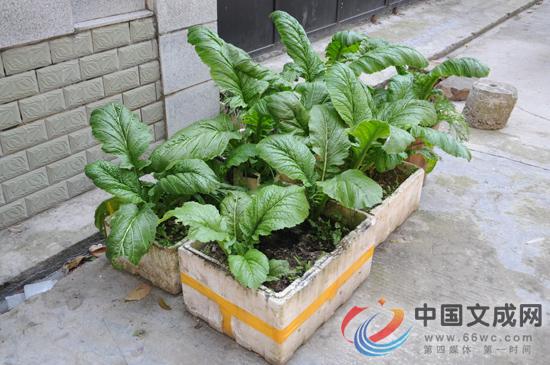 曝光台:门前种蔬菜,千奇百怪