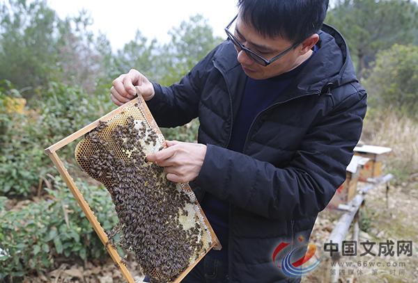 """文成蜂农高山养蜂  成""""甜蜜""""新产业"""