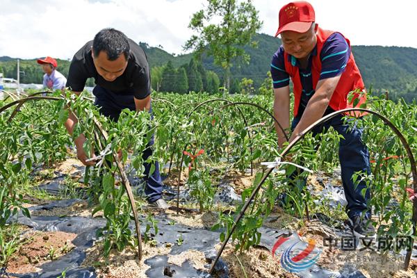 台风过后农业受损严重 党员干部助力灾