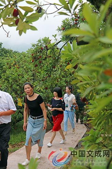媒体网红游杨梅园 为珊溪杨梅节预热