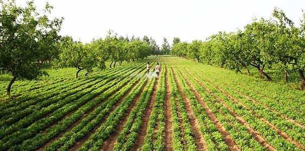 """我县拟将为多种农产品种植""""上保险"""""""